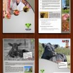 Hybrid Content Brochure Designing